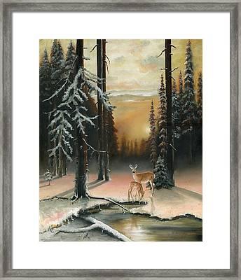 Winter Redwoods Framed Print by Cecilia Brendel