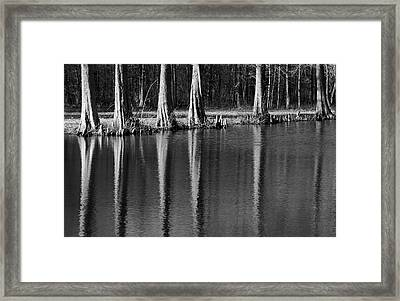 Winter Reflections - Cypress Tree Art Print Framed Print by Jane Eleanor Nicholas