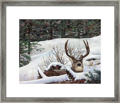 Winter Rest Framed Print by Karen Cade