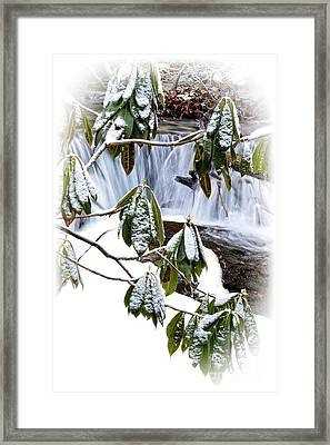 Winter Rhododendron And Waterfall Framed Print by Thomas R Fletcher