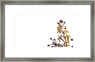 Framed Print featuring the photograph Winter Rose by Linda Shafer
