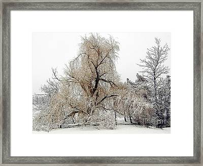 Winter Scene Framed Print by Kathleen Struckle