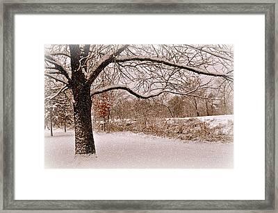 Winter Scene Framed Print by Marty Koch