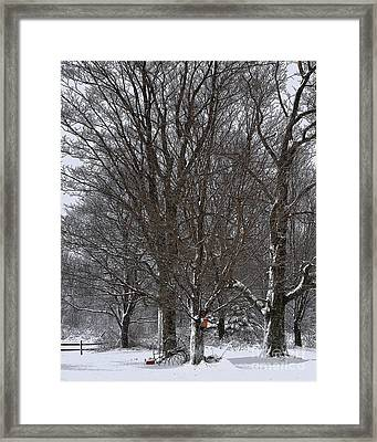 Winter Shadows Framed Print by Diane E Berry