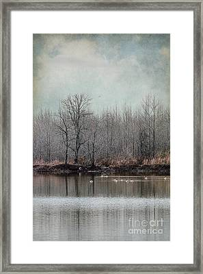 Winter Solitude Framed Print by Jai Johnson