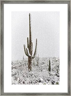 Winter Sonoran Style  Framed Print