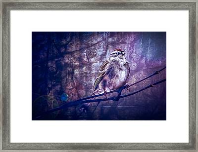 Winter Sparrow Framed Print