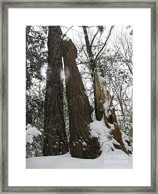 Framed Print featuring the photograph Winter Spirits by Melissa Stoudt