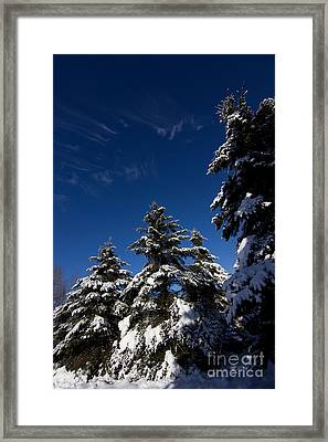 Winter Spruce Framed Print by Steven Valkenberg