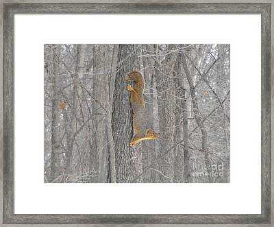 Winter Squirrel Framed Print by Erick Schmidt