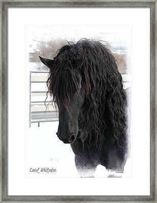Winter Stallion Framed Print