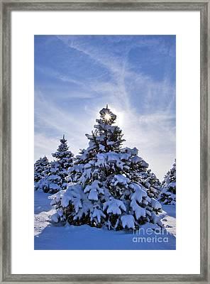 Winter Starburst - D008347 Framed Print by Daniel Dempster