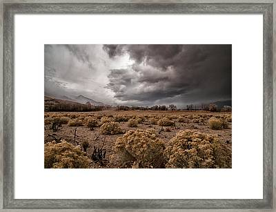 Winter Storm Framed Print by Cat Connor