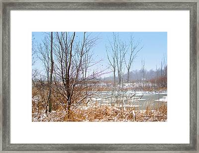 Winter Storm On Patterson Wetlands Kent County Michigan Framed Print by Rosemarie E Seppala