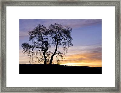 Framed Print featuring the photograph Winter Sunrise With Tree Silhouette by Priya Ghose