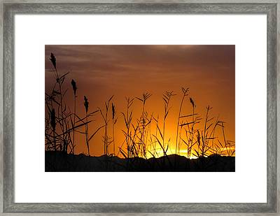 Winter Sunrise Framed Print by Tammy Espino