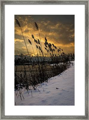 Winter Sunrise Through The Reeds Framed Print