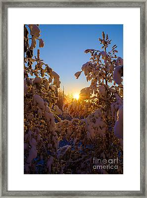 Winter Sunset Behind The Trees Framed Print