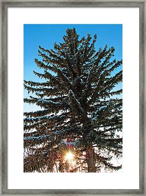 Winter Sunset Framed Print by Stephanie Grooms
