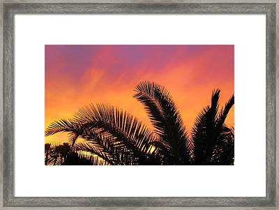 Winter Sunset Framed Print by Tammy Espino