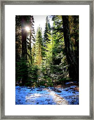 Winter Sunshine On Chinook Pass Framed Print