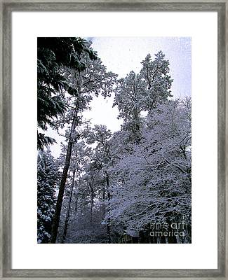 Winter Surprise Framed Print by Silvie Kendall