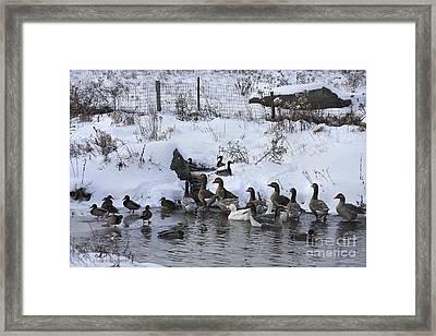 Winter Swimming Hole Framed Print by Deborah Benoit