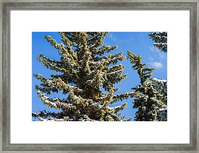 Winter Tale - Featured 3 Framed Print by Alexander Senin