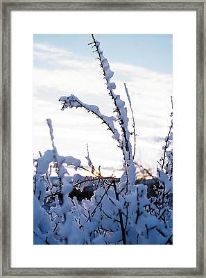 Winter Framed Print by Terry Reynoldson