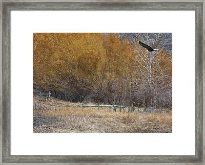 Winter Thaw Framed Print