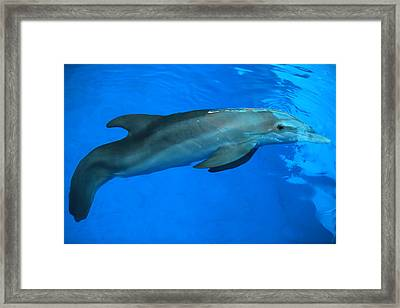 Framed Print featuring the photograph Winter The Dolphin by Doug McPherson