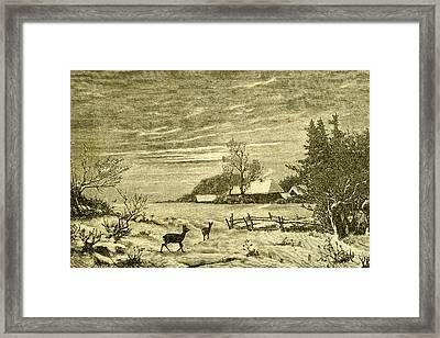 Winter Time Deer Austria 1891 Framed Print by Austrian School
