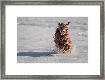 Winter Time Framed Print by Robert Krajnc