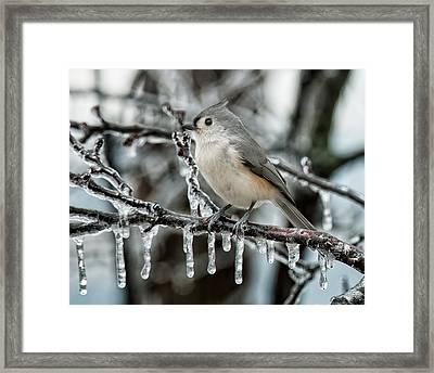 Winter Titmouse Framed Print by Lara Ellis