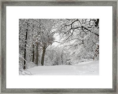 Winter Trail Framed Print
