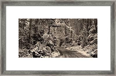 Winter Trail Framed Print