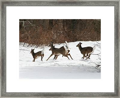 White Tailed Deer Winter Travel Framed Print