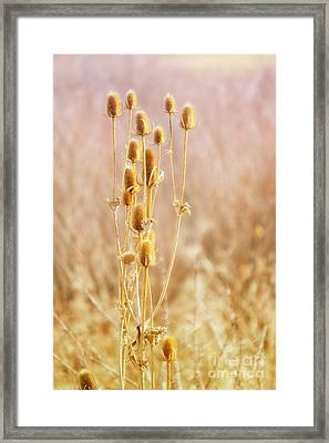 Winter Treasure Framed Print