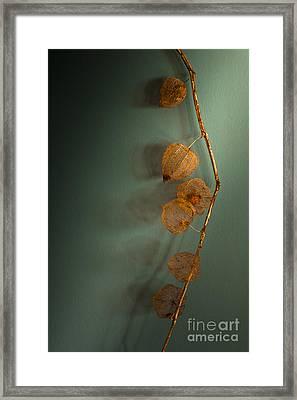 Winter Treasures Framed Print by Jan Bickerton
