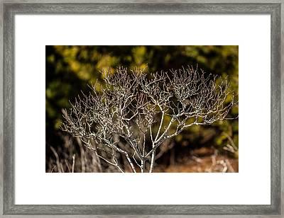 Winter Tree Framed Print by Allan Morrison