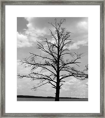Framed Print featuring the photograph Winter Tree by Andrea Anderegg