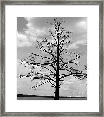 Winter Tree Framed Print by Andrea Anderegg