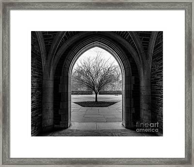 Winter Tree At Duke University Framed Print by Emily Kay