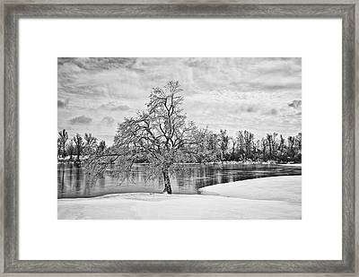 Winter Tree At The Park  B/w Framed Print