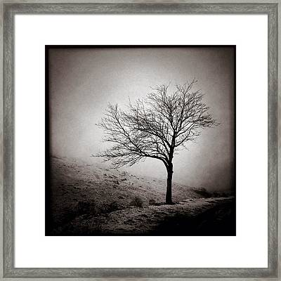Winter Tree Framed Print by Dave Bowman