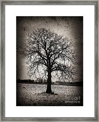 Winter Tree Framed Print by Elena Elisseeva