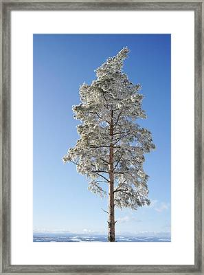Winter Tree Germany Framed Print