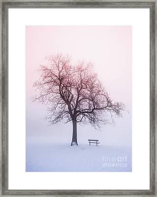 Winter Tree In Fog At Sunrise Framed Print
