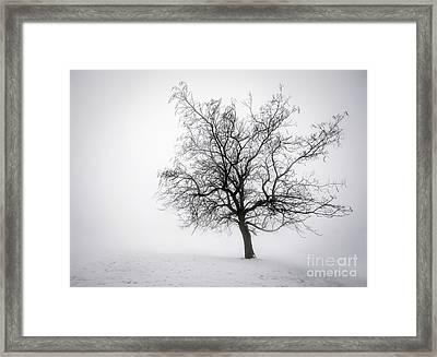 Winter Tree In Fog Framed Print by Elena Elisseeva