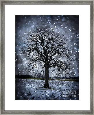 Winter Tree In Snowfall Framed Print